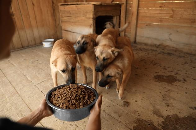 Pour soutenir les refuges, Zoomalia offre un repas à un animal abandonné pour chaque achat en ligne !