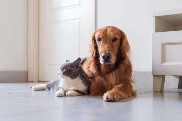 Ile-de-France : vers un « permis d'adopter » pour les animaux de compagnie ?