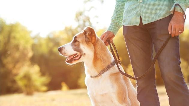 Comment éviter de s'ennuyer lors des promenades avec son chien ?