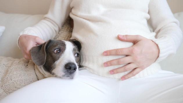 Je suis enceinte et mon chien déprime, que faire ?
