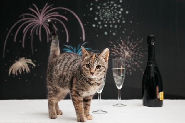 chat feux d'artifice 31 décembre