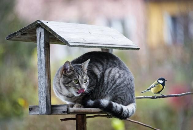 chat qui chasse un oiseau