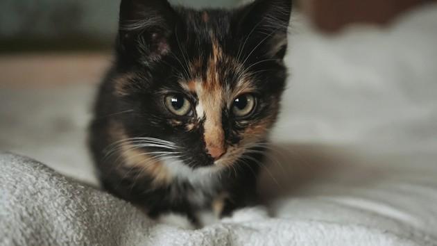 Anxiété de séparation : comme les chiens, les chats aussi en souffrent !
