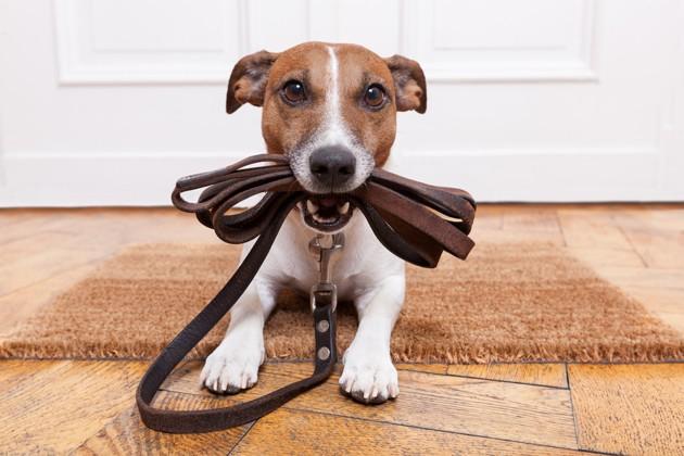 Covid-19 : Emprunte mon Toutou offert pendant le confinement pour soulager les propriétaires de chiens à risque