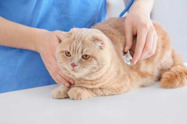 chat malade chez le vétérinaire