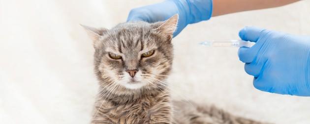 Covid 19 : le variant britannique pourrait (aussi) infecter les chiens et les chats