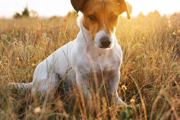Comment éviter que ma chienne ne tombe enceinte ?