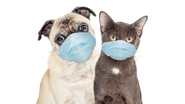 Covid-19 : doit-on aussi vacciner nos chiens et nos chats ?