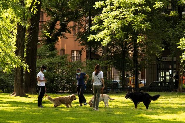 promeneurs de chiens covid-19