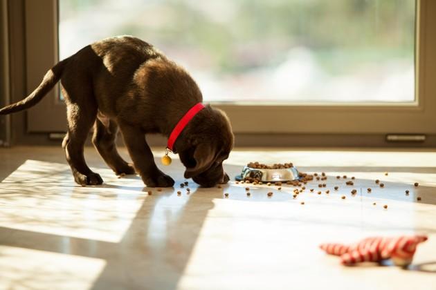 Comment gérer la diarrhée de mon chien avec des croquettes ?