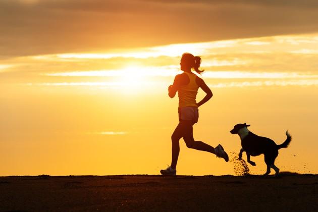 Les propriétaires de chiens ont moins de chances de mourir d'un accident cardiovasculaire