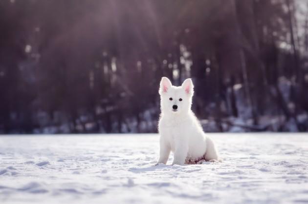 3 astuces pour aider votre chiot à traverser l'hiver !