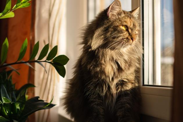 chat qui se lève avec le soleil