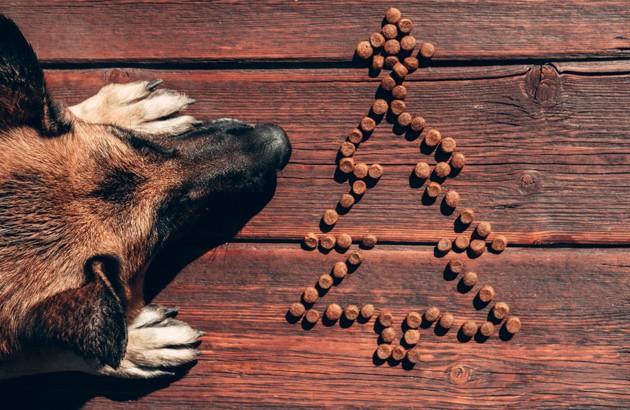 croquettes de chien en forme de sapin