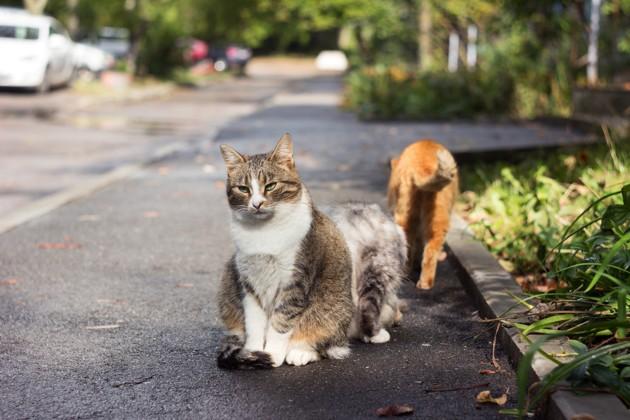 Chats errants sur le trottoir