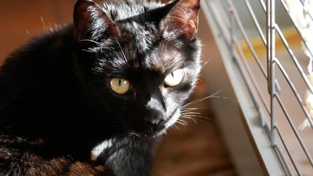 Chat noir près d'une cage