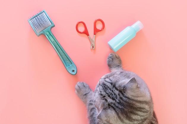 Peut-on laver son chat ?