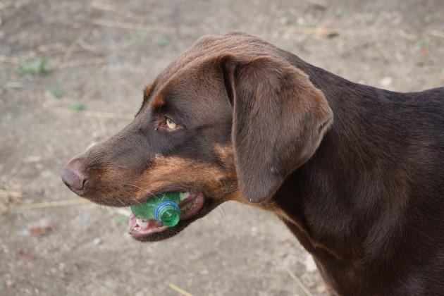 chien avec du plastique en bouche