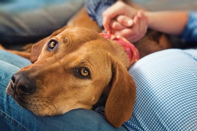Covid-19 : comment votre chien vit-il le confinement et quelles sont les répercussions sur sa santé ?