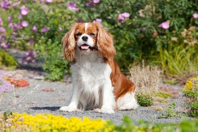 Top 10 des noms de chiens les plus populaires en 2019 : découvrez les noms préférés des Français !