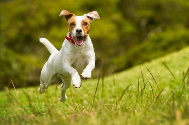 Comment bien préparer le retour de vacances du chien ?