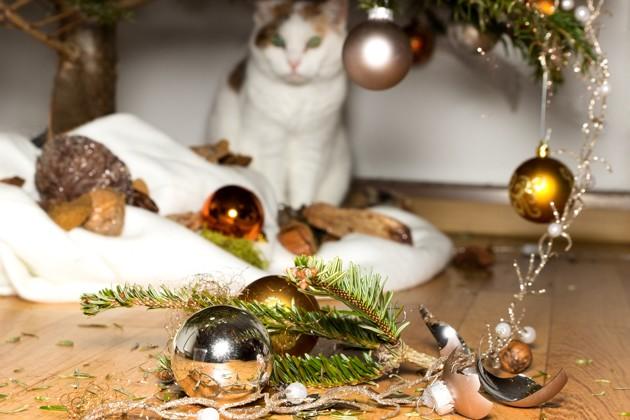 chat qui a cassé les décorations de Noël