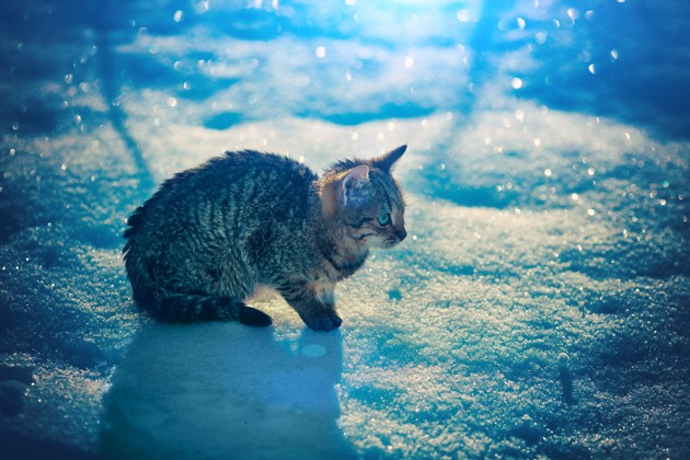 chaton qui a froid dans la neige