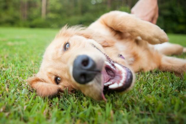 Nom de chien en R pour l'année 2020 : toutes nos idées pour votre chiot !