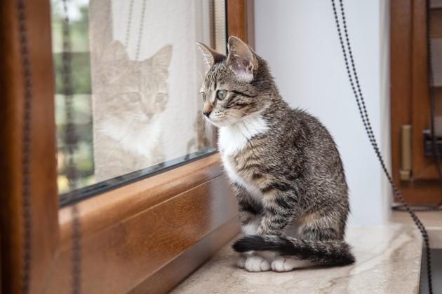 Est-il vraiment interdit de laisser sortir son chat dans l'Union européenne ?