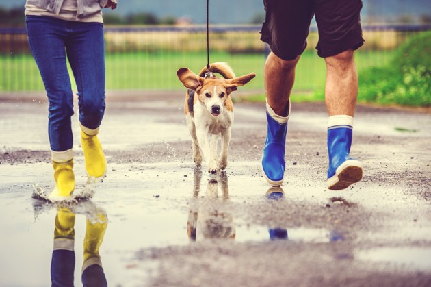 Mon chien ne veut pas sortir quand il pleut : que faire ?
