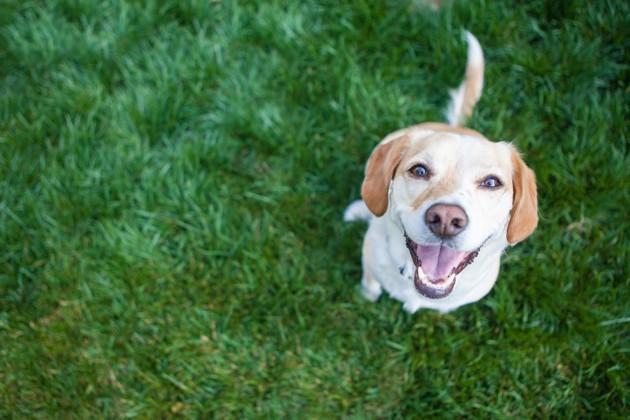 Voici la meilleure façon de calculer l'âge humain de votre chien, selon les scientifiques !