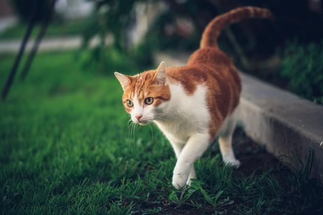 Comment laisser son chat sortir en toute sécurité ?