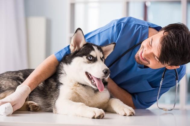 Le plus vieux cancer du monde est transmissible et il touche les chiens !