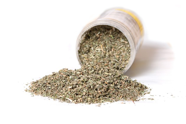 L'herbe à chat, un anti-moustiques efficace ?