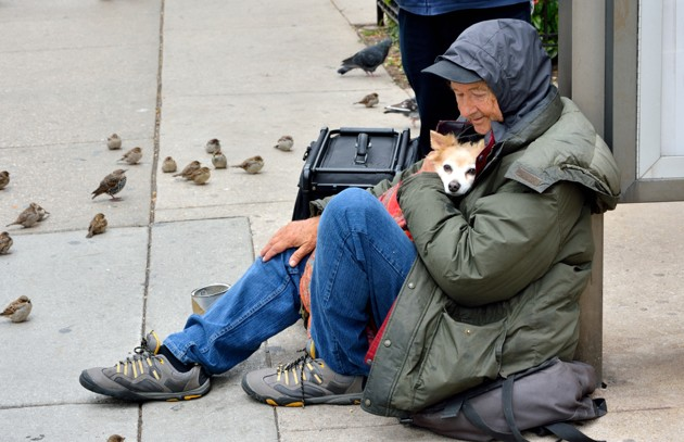 Prix PURINA BetterwithPets 2020 : StreetVet qui soigne les chiens de SDF remporte le 1er prix