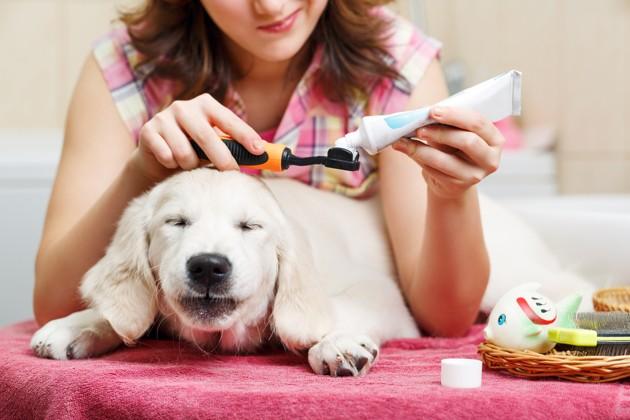 Pourquoi et comment brosser les dents de son chien ?