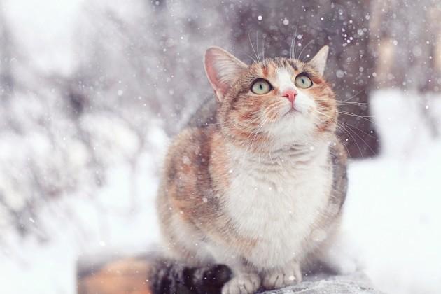 chat qui a froid en hiver