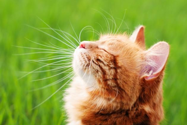 5 choses à faire pour occuper mon chat en mon absence