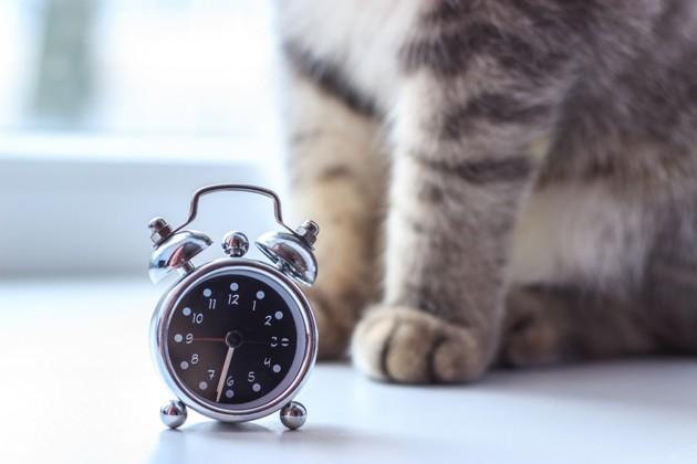 chat avec une horloge