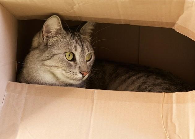 Covid-19 : comment occuper son chat à la maison pendant le confinement ?