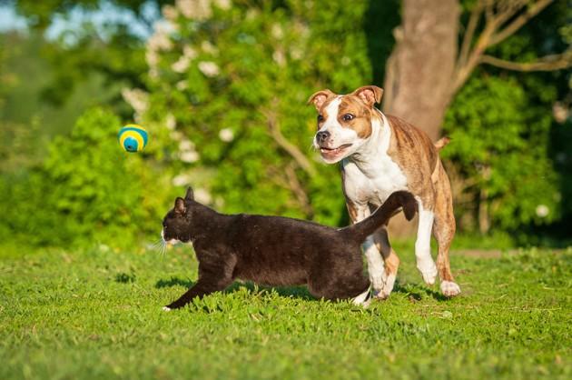 Vacances d'été 2020 : les conseils de 30 Millions d'Amis pour partir en vacances avec son chien ou chat