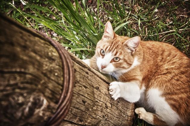 cat qui grimpe sur un arbre avec ses griffes