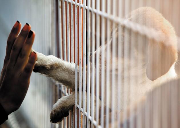Comment adopter un animal à la SPA ?