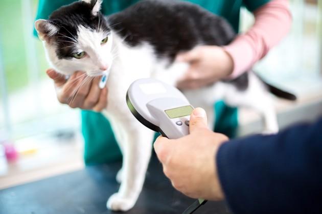 Semaine nationale de l'identification : pucer son chien ou chat, le premier pas pour protéger son animal