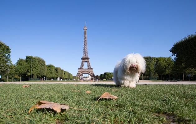 Comment faire du vélo avec son chien à Paris ?
