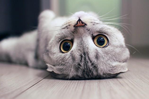 Boutons, démangeaisons : attention à l'allergie au chat !