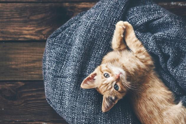 Mon chat a-t-il froid en hiver ?