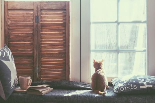 chat qui regarde par la fenêtre en hiver