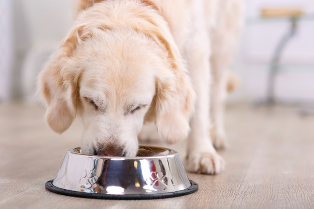 BARF pour chiens et chats : les aliments crus sont-ils dangereux pour leur santé ?