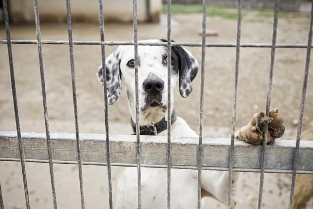 Adoption pendant le confinement : entre bénéfices et inquiétudes